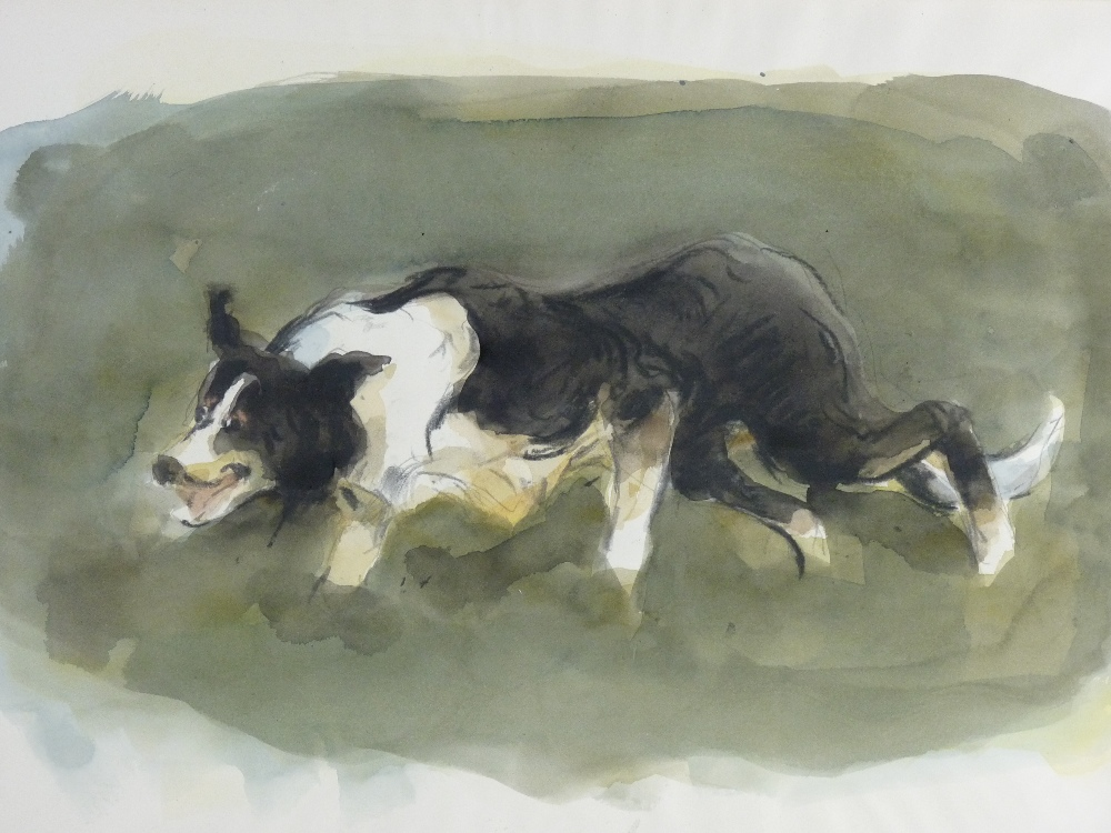 Study of a sheep dog in pursuit