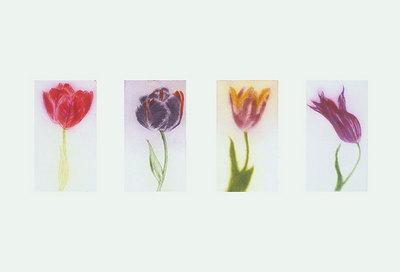 (x3)Tulips